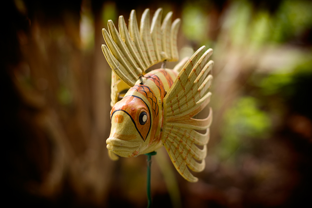 Garden fish close-up