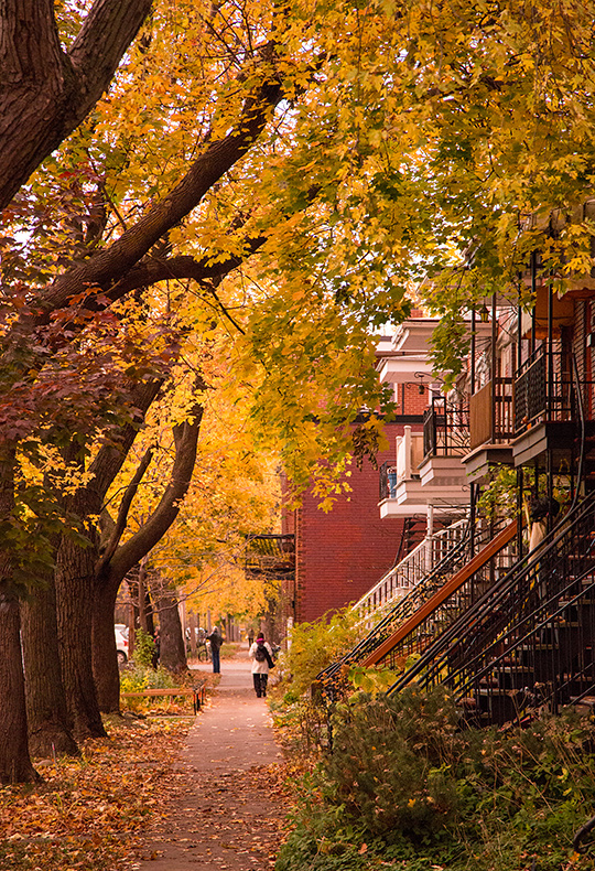 fall glow on a tree-lined Montreal street