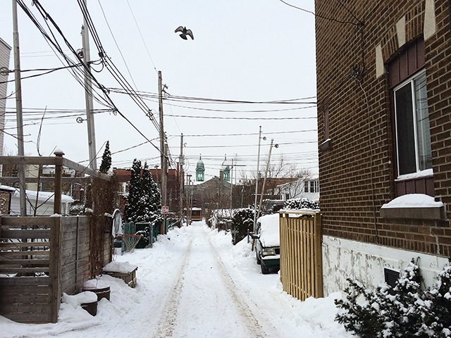 an alley view with pigeon