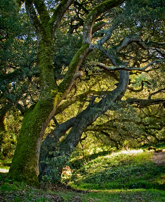 In the shade of an oak grove